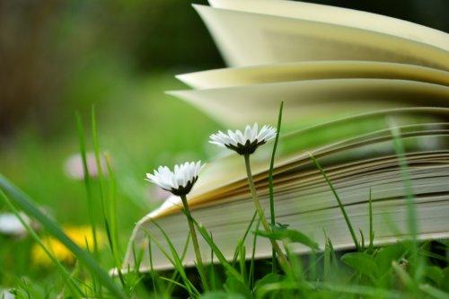 Kostenlose Artikel und Handbücher
