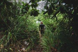 Schleichwege im Dschungel der Arbeitswelt